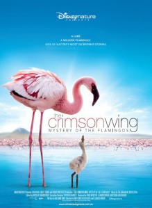 EARTH, as it turns out, is not actually the first film from Disneynature, but actually just the first film to be released in North America. The actual title of first film belongs to a documentary called The Crimson Wing: Mystery of the Flamingos.