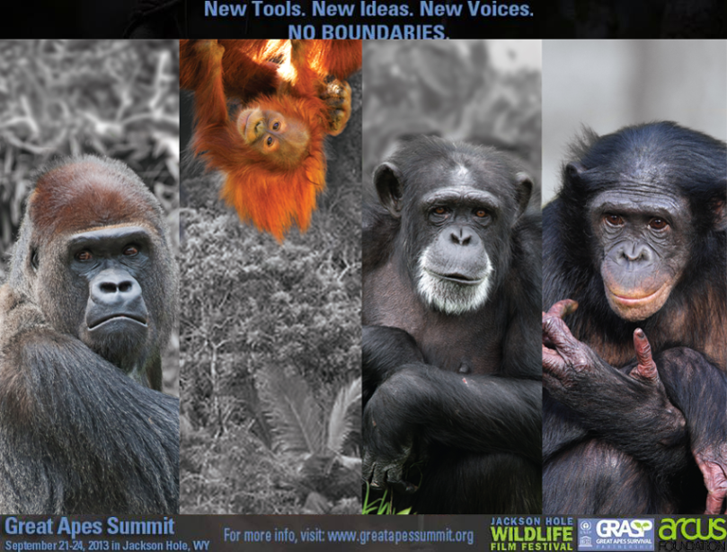 Great Apes Summit Poster