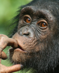 CHIMP_index
