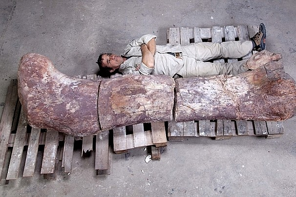 Argentina_Giant_Dinosaur-0cdda-k2FE--606x404@wp.com